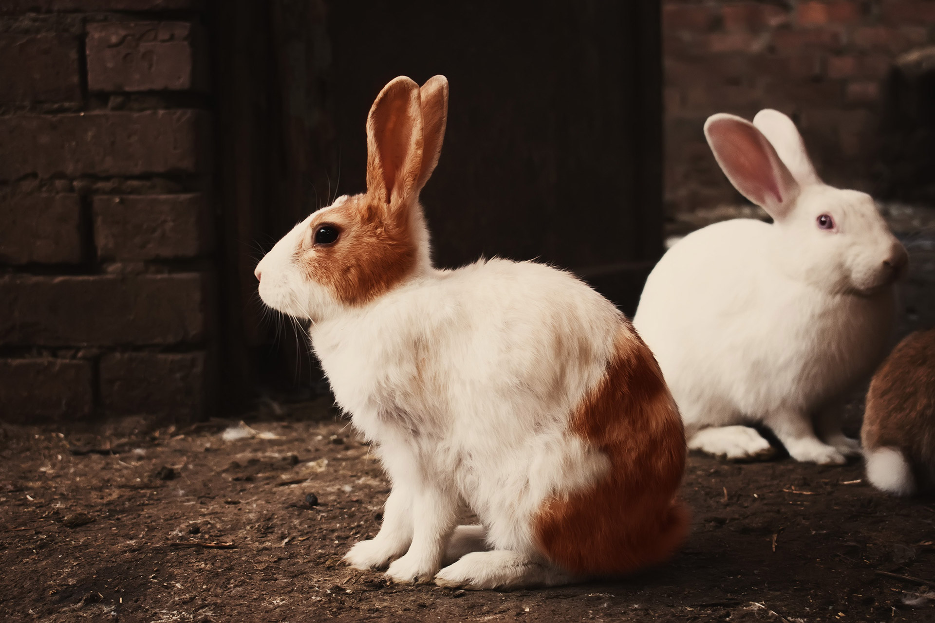 Animal Rights Activism | End Animal Testing