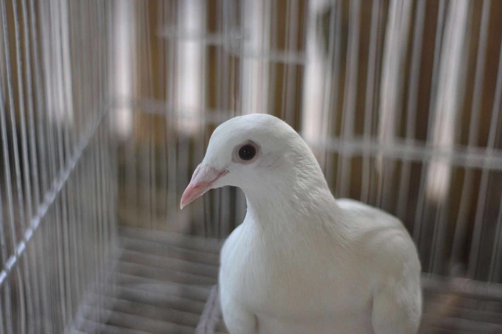 Dove is not a cruelty-free brand